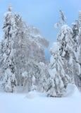 在雪下厚实的层数的树  免版税库存照片