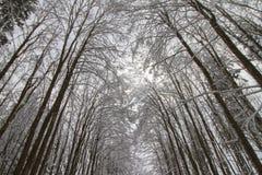 在雪下的冬天森林 免版税库存图片