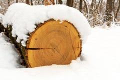 在雪下的日志 免版税图库摄影