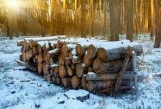 在雪下的木日志在森林里 免版税库存图片