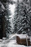 在雪下的木日志 免版税库存照片