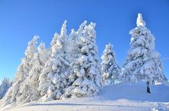 在雪下的杉树在山 免版税库存照片