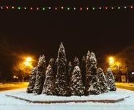 在雪下的杜松在晚上末期 免版税库存图片
