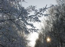 在雪下的树在公园 库存图片