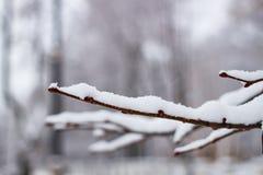 在雪下的树枝在冬天 图库摄影