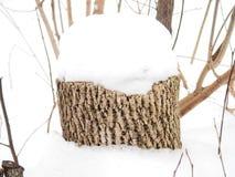 在雪下的树桩树 库存图片