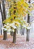在雪下的栗树 库存图片