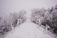在雪下的森林公路在冬天 免版税库存照片