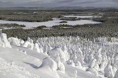 在雪下的森林 低地风景视图 免版税库存照片