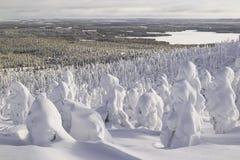 在雪下的森林 风景 免版税库存图片
