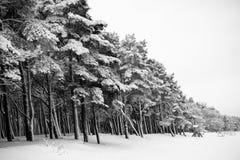 在雪下的森林 库存图片