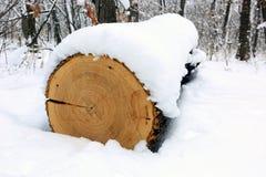 在雪下的橡木日志 免版税图库摄影