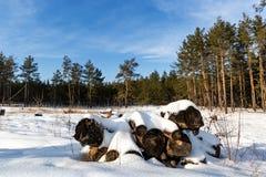在雪下的老日志 免版税库存照片