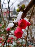 在雪下的花 库存照片