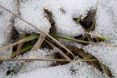 在雪下的草 免版税库存照片