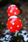 在雪下的蘑菇 库存图片