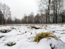 在雪下的被染黄的草 免版税库存图片