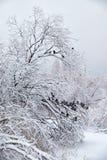 在雪下的被雪包围住的树在冬天 在早午餐的鸽子 库存图片