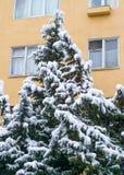 在雪下的赛普里斯在南部的城市 免版税库存照片