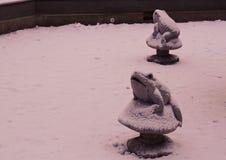 在雪下的青蛙 免版税库存照片