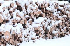 在雪下的击倒的木头 免版税库存图片