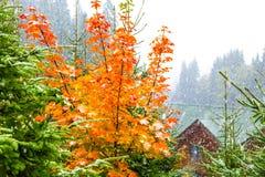 在雪下的黄色秋天树 免版税库存照片