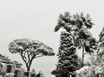 在雪之下的结构树在冬天 免版税库存图片