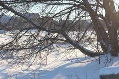 在雪之下的结构树 库存照片