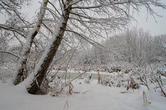 在雪以后的莫斯科公园 免版税库存图片