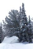 在雪冬天风景的脚印 库存照片