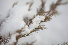 在雪分支  库存图片