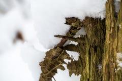 在雪包括的结构树 免版税图库摄影
