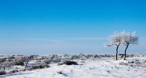 在雪原的树 免版税库存照片