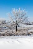 在雪原的树 图库摄影