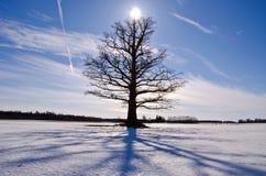 在雪原的老和偏僻的橡树 免版税库存图片