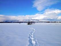 在雪原的踪影对山 免版税库存照片