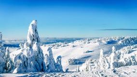 在雪和冰充分地盖的树在蓝天下 库存照片