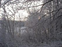 在雪和冰盖的树 免版税库存图片