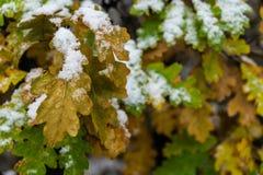 在雪和叶子盖的树在冬天 免版税库存图片