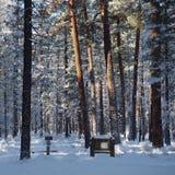 在雪和早晨光的足迹 免版税库存照片