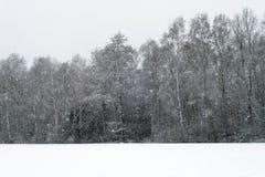 在雪和草甸盖的树在降雪期间 免版税库存图片