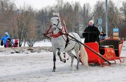 在雪地面的白马奔跑 库存图片