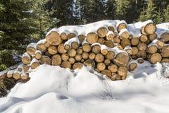 在雪埋没的木头日志在森林 免版税库存图片
