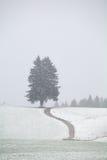 在雪小山的道路在暴风雪期间 库存图片