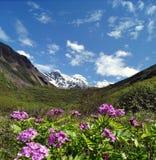 在雪山前的紫色花 免版税库存照片