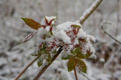 在雪把coverd,春天留在 免版税库存照片