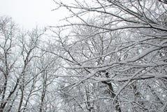 在雪报道的光秃的分支 库存照片