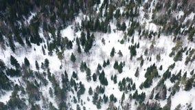在雪报道的冬天森林空中寄生虫视图,自然秀丽  r 结冰的松树森林,顶视图 股票视频