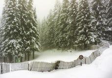在雪报道的冷杉森林冬天风景-孚日省,法国 库存照片