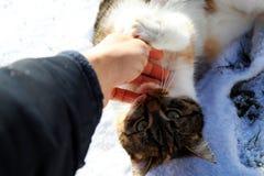 在雪报道的地面的一只说谎的猫 库存照片